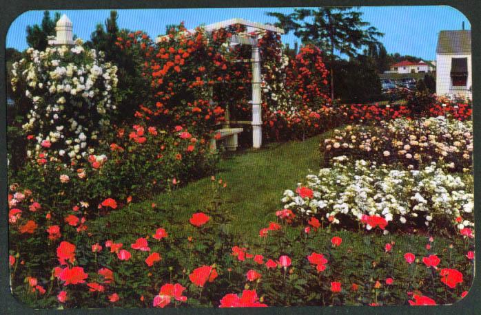 Jackson Perkins Rose Garden Newark NY postcard 1950s