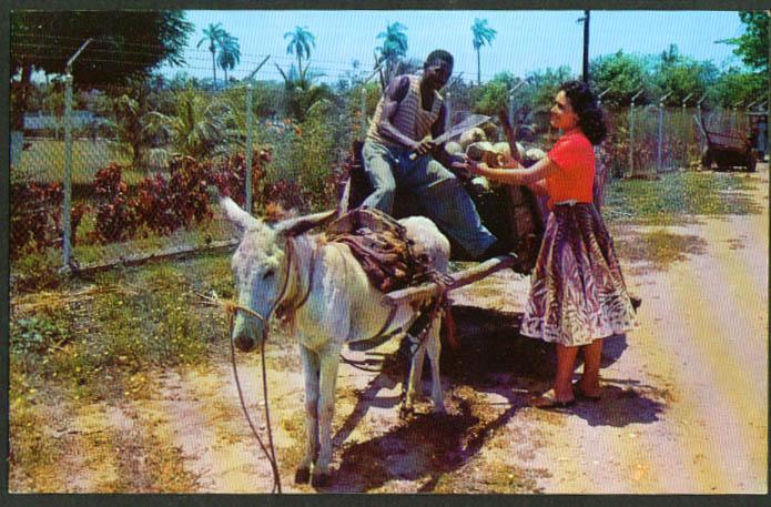 1-burro coconut wagon machete Jamaica BWI postcard 1950s