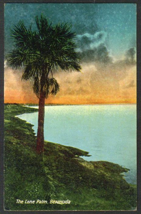 The Lone Palm on Bermuda postcard 1910s
