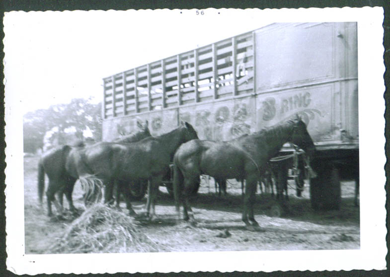Horses King Bros circus snapshot Middletown CT 1956
