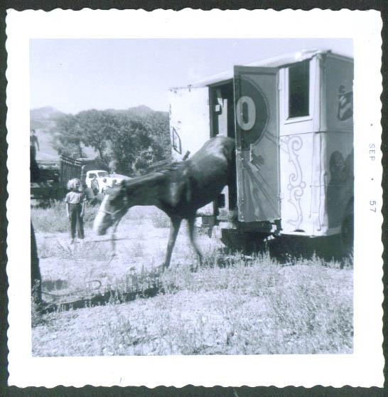 Horse Wagon Carson Barnes circus snapshot Mackey ID '57