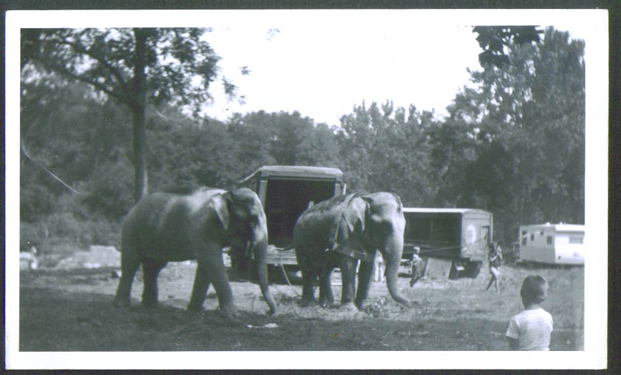 Image for Elephants Mills Bros Circus undated circus snapshot 50s