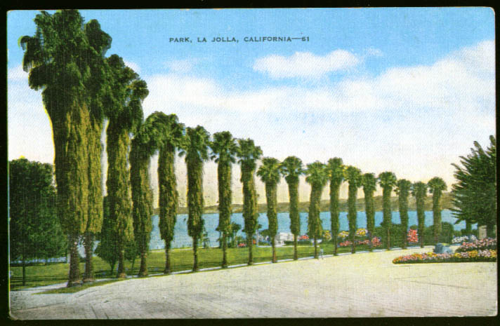 Line of trees in the Park La Jolla CA postcard 1940s