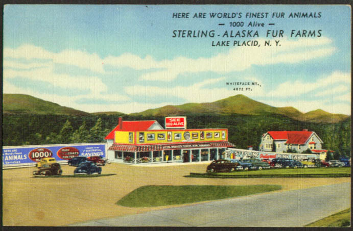 Sterling Alaska Fur Farms Lake Placid NY postcard 1951