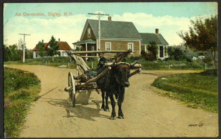 1-ox Ox-mobile Digby NS postcard 1914