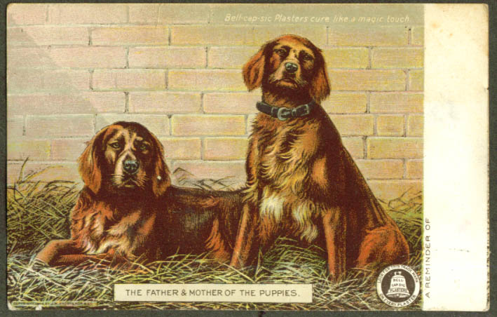 Father Mother of Puppies Bel-cap-sic Plasters postcard