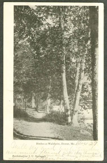 Birches at Waldheim in Dexter ME undivided back postcard 1905