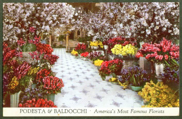 Podesta & Baldocchi Florists 224 Grant Av San Francisco CA postcard 1940s