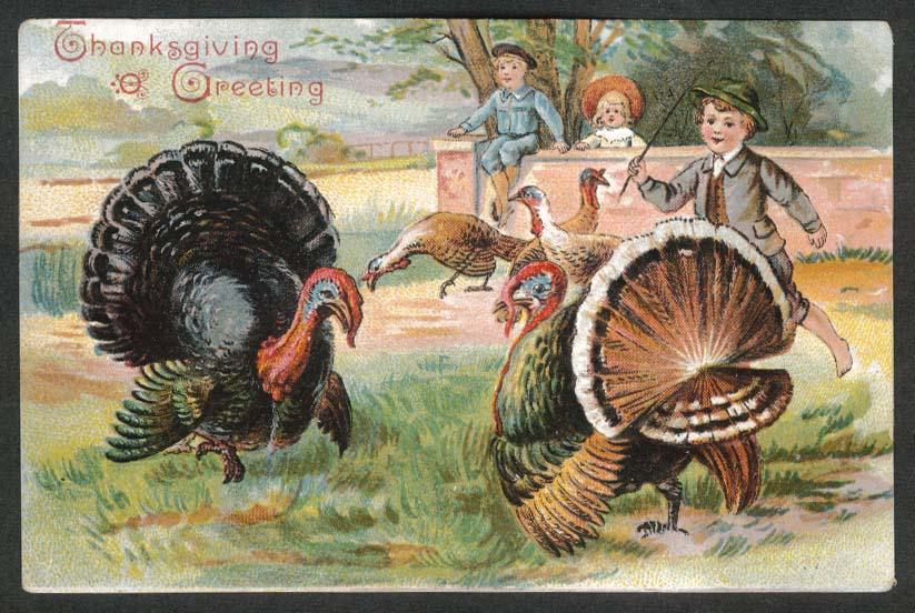 Thanksgiving Greeting turkeys embossed postcard 1910s