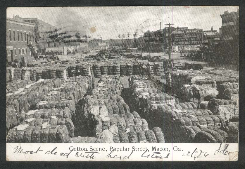 Cotton Scene Popular Street Macon GA undivided back postcard 1906