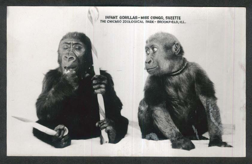 Infant Gorillas Chicago Zoological Park Brookfield IL RPPC postcard 1930s