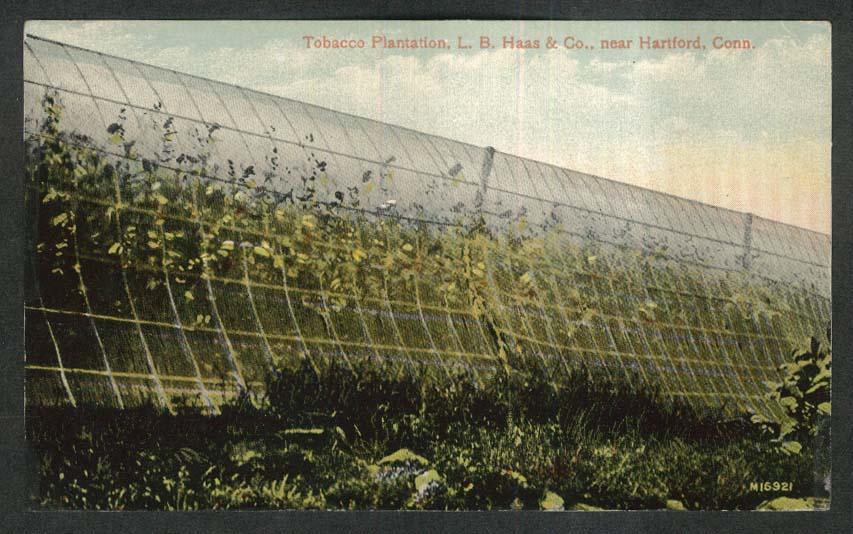 Tobacco Plantation L B Haas & Co near Hartford CT postcard 1910s