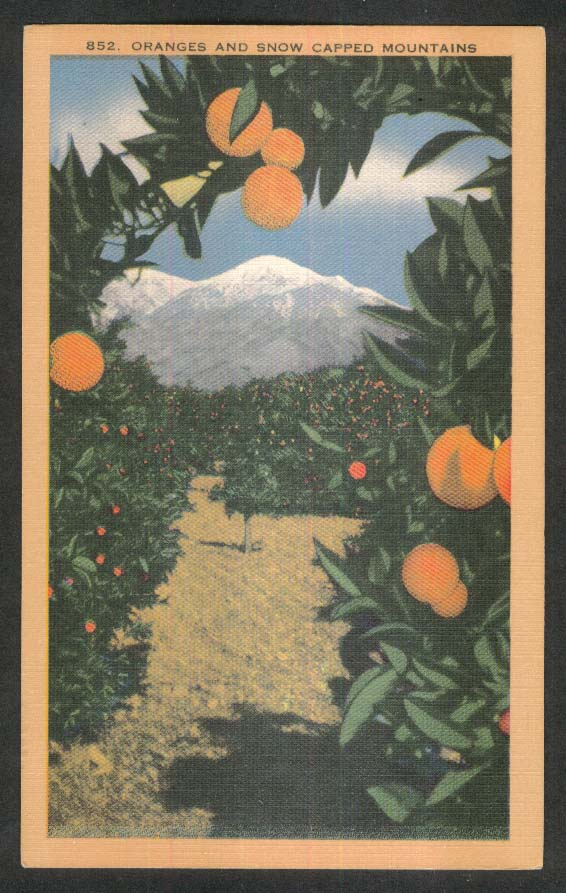 Oranges & Snow Capped Mountains in California postcard