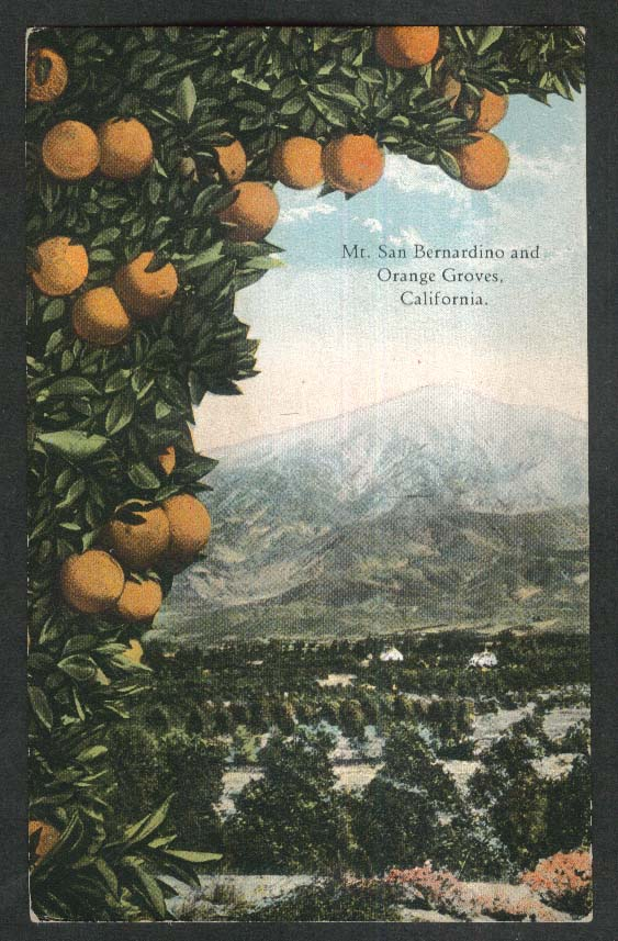 Mt San Bernardino & Orange Groves CA postcard 1930s