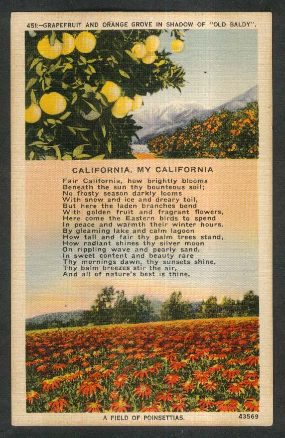 Grapefruit & Orange Grove Old Baldy Poinsettia Field CA postcard 1930s