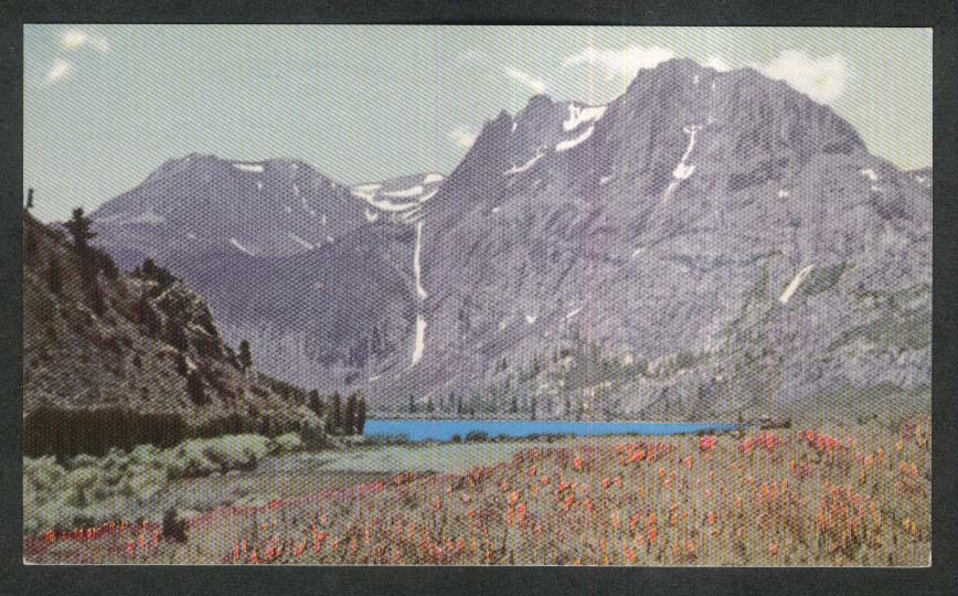 Indian Paint Brush Gull Lake CA Union 76 Oil Company postcard 1939