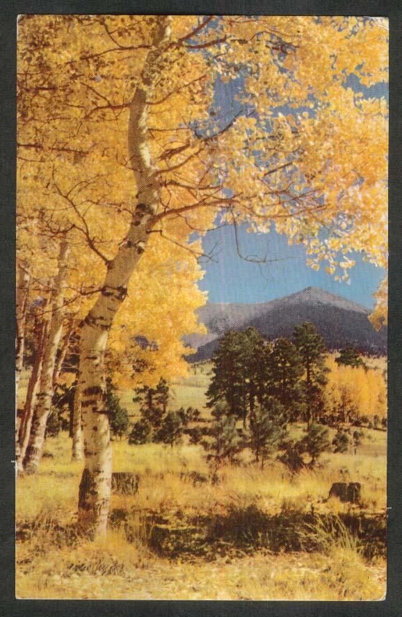 Aspens Flagstaff AZ Union Oil Company postcard 1940s