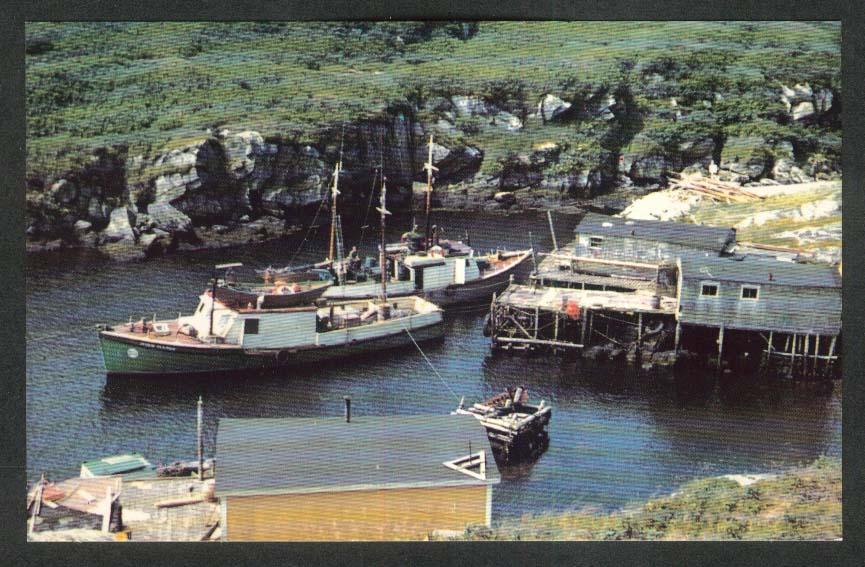 Fox Roost near Port aux Basque Newfoundland Canada postcard 1950s