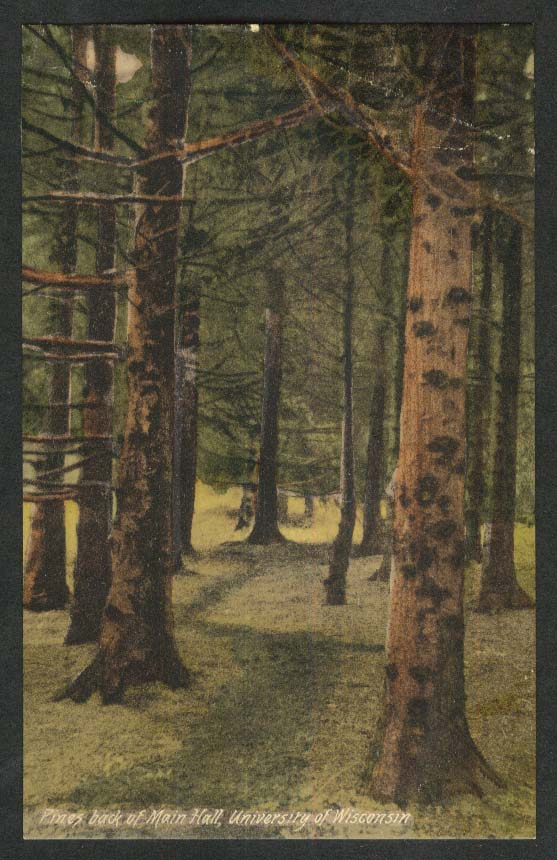 Pines back of Main Hall University of Wisconsin WI postcard 1910s