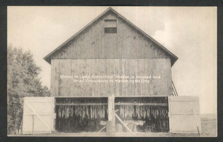 Strung on Laths Connecticut Tobacco Smoked & Dried CT postcard 1940s