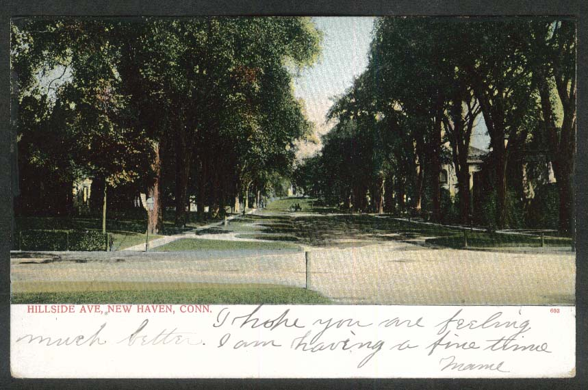 Hillside Avenue New Haven CT undivided back postcard 1906