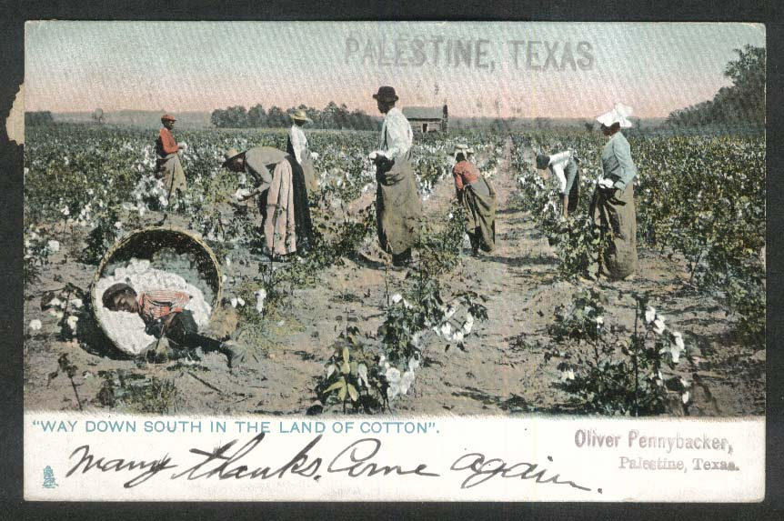 Cotton-Picking in Palestine TX undivided back postcard 1907