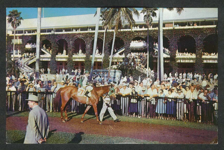View of the Paddock Walking Ring Hialeah Race Course FL postcard 1960
