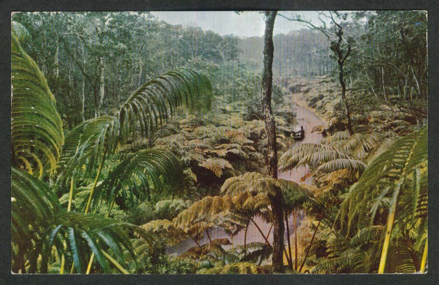 Fern Forest Hawaiian National Forest HI postcard 1957