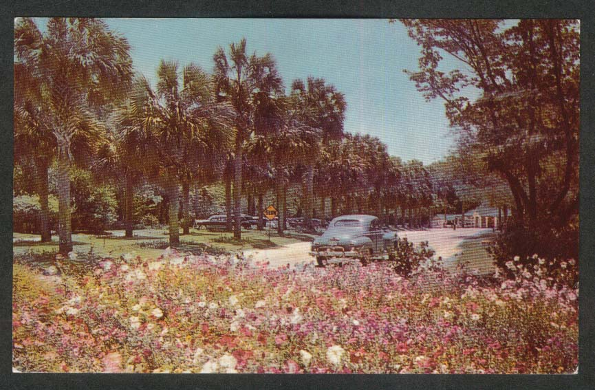 Silver Springs Nature's Underwater Fairyland FL postcard 1951