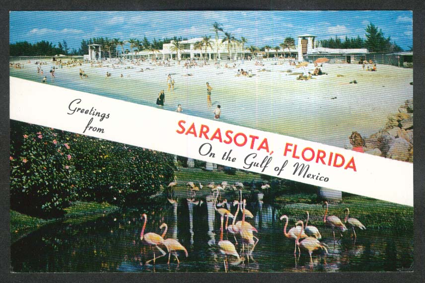 Flamingos at Jungle Gardens Sarasota FL postcard 1968