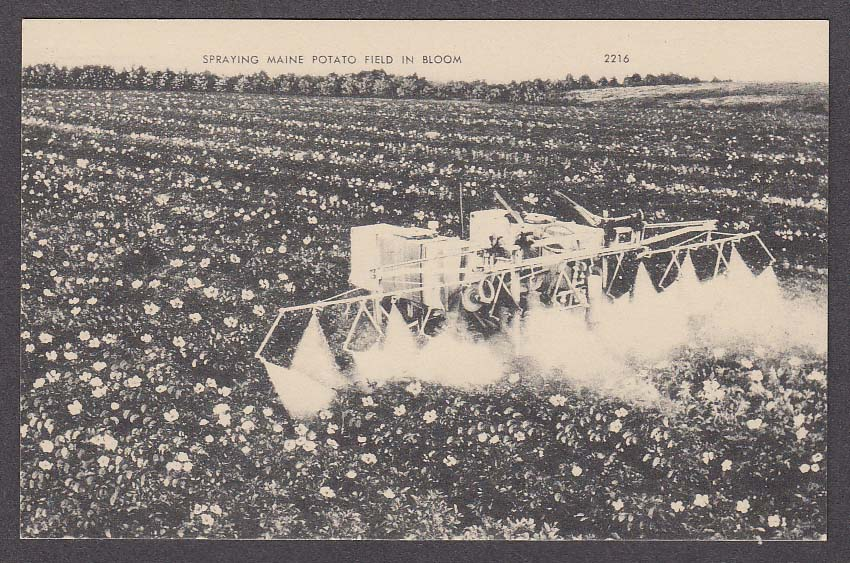 Image for Spraying Maine Potato Field in Bloom postcard 1950s