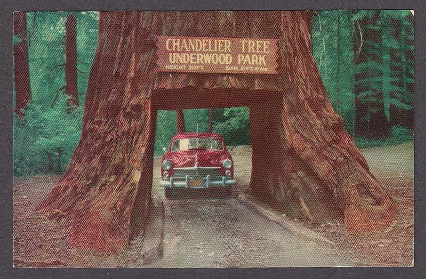 Image for 1949 Hudson Chandelier Drive-Thru Tree CA  postcard 1950s