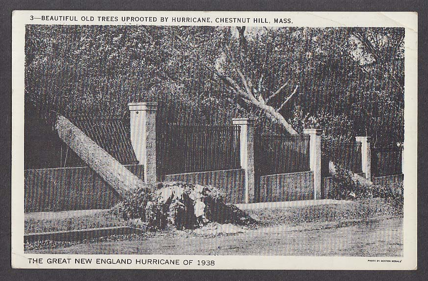 Trees Uprooted by Hurricane Chestnut Hill MA postcard 1938