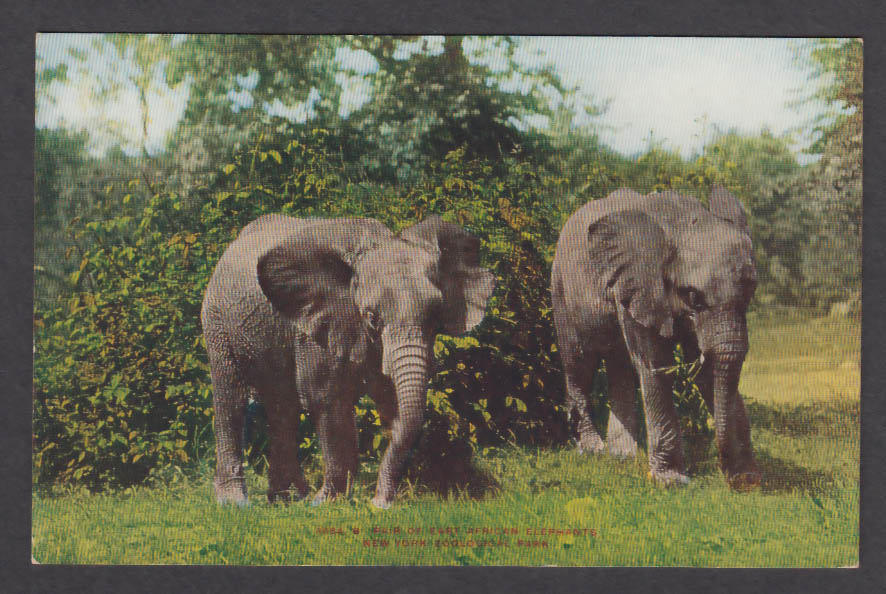 Image for Pair of East African Elephants New York Zoological Park postcard 1920s