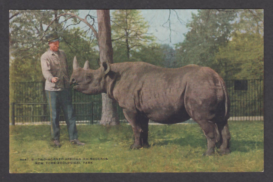Image for Two-Horned African Rhinoceros New York Zoological Park postcard 1920s