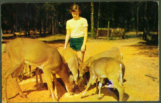 Deer Park Wisconsin Dells WI postcard 1960