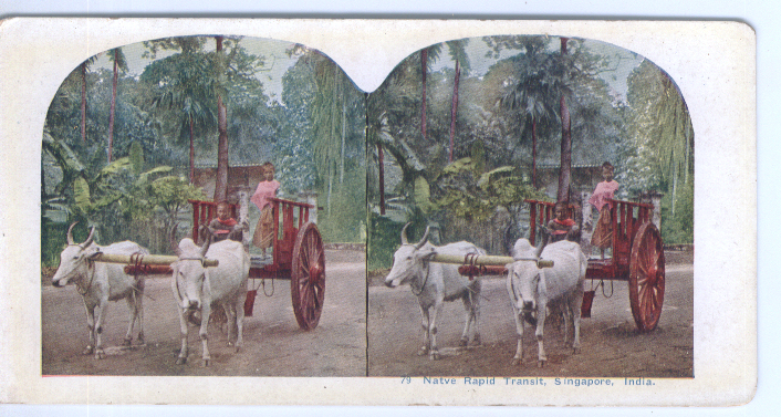 1900s Stereoview Oxcart Singapore