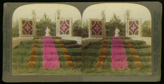 Girl Washington Park Chicago flowers stereoview 1899?