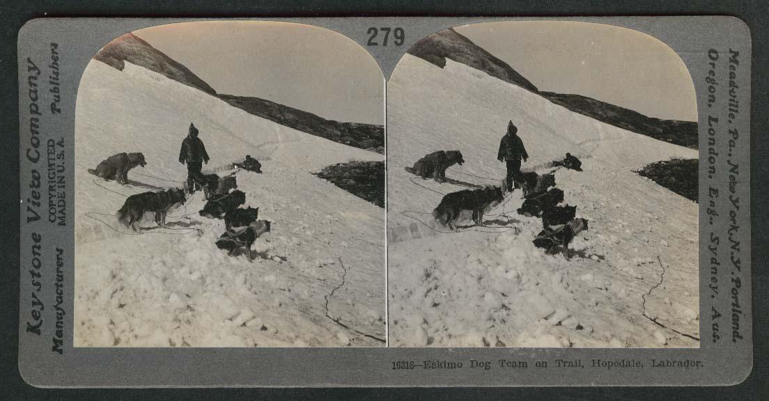 Eskimo dog team on trail Hopedale Labrador stereoview