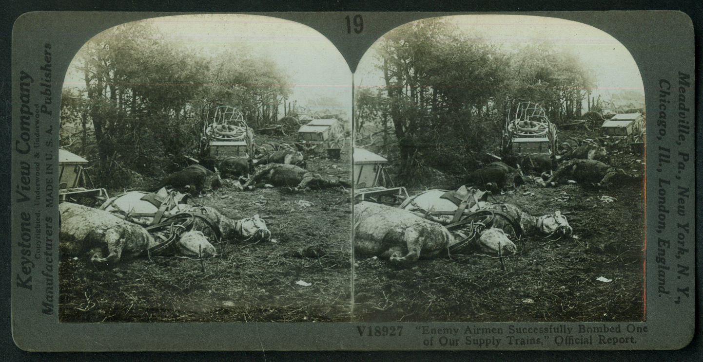 After Germans bombed Allied Supply Train dead horses World War I stereoview 1918