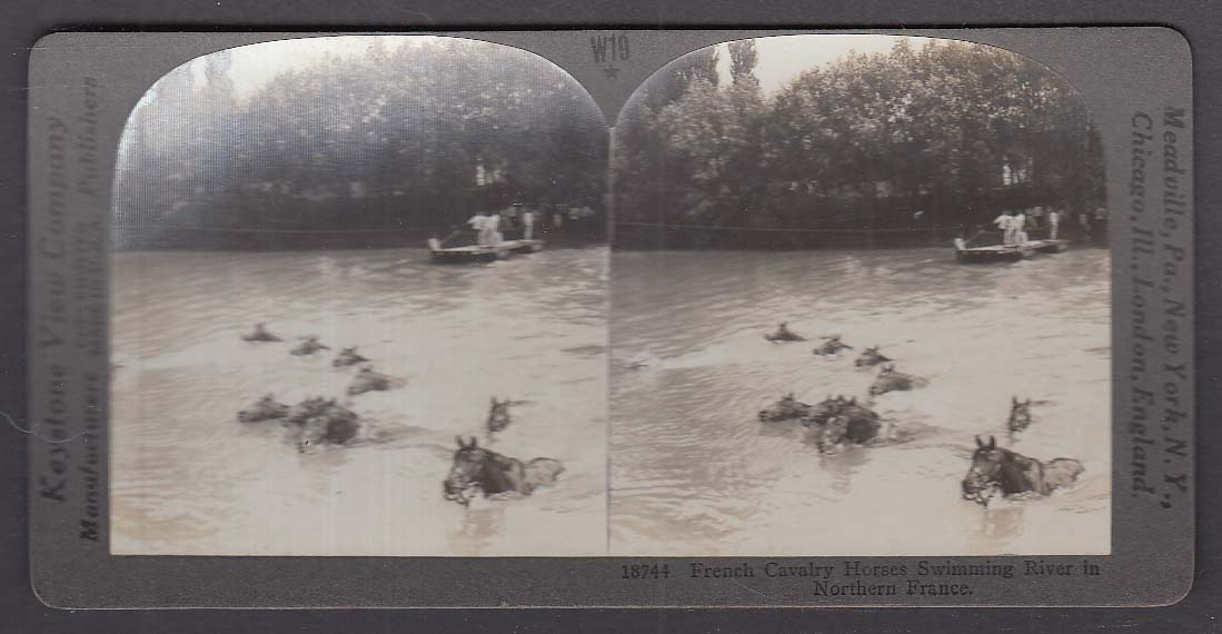 French Cavalry Horses Swimming River in France WWI Keystone stereoview 1920s