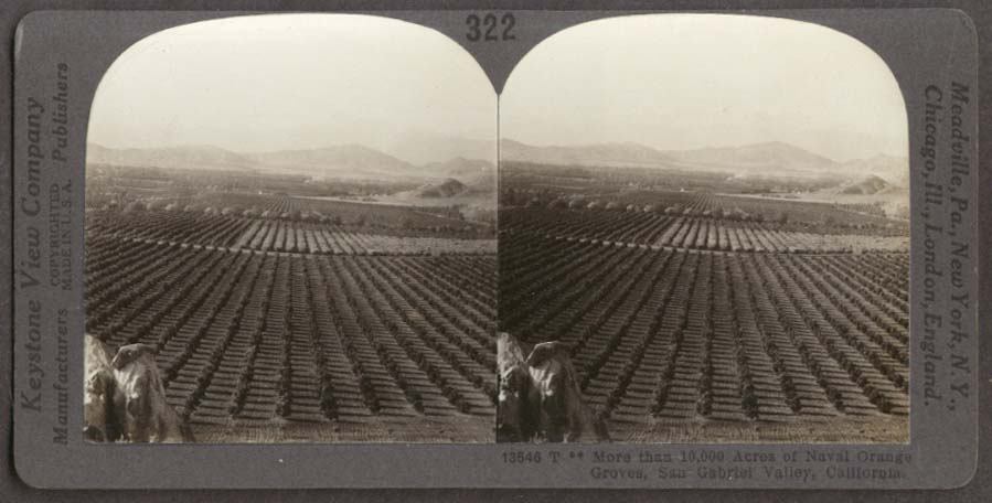 Orange Groves San Gabriel Valley CA stereoview 1910s