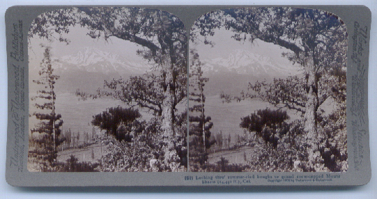 1904 Stereoview Mount Shasta CA View
